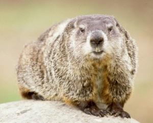 groundhog1a