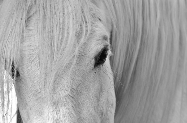 black and white photo of horse - 1000