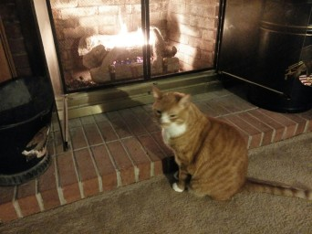 fireplace and cat