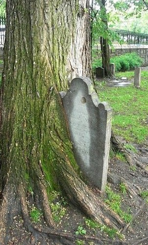 tombstone in tree cropped